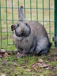 RabbitInCage
