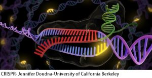 CRISPR- Jennifer Doudna-University of California Berkeley