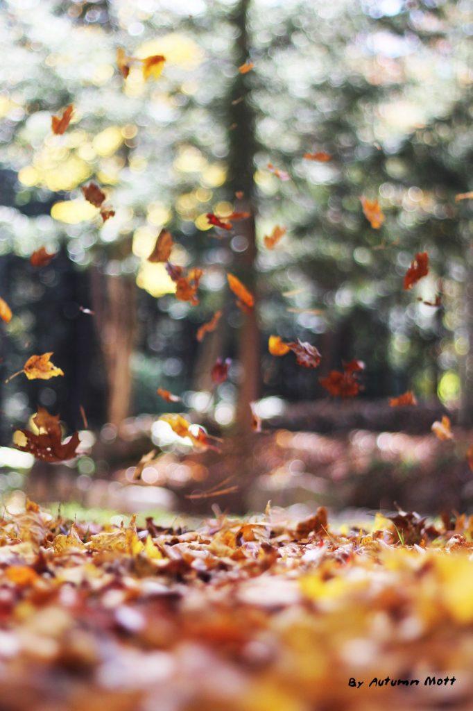 photo-1429198739803-7db875882052-By Autumn Mott.R30