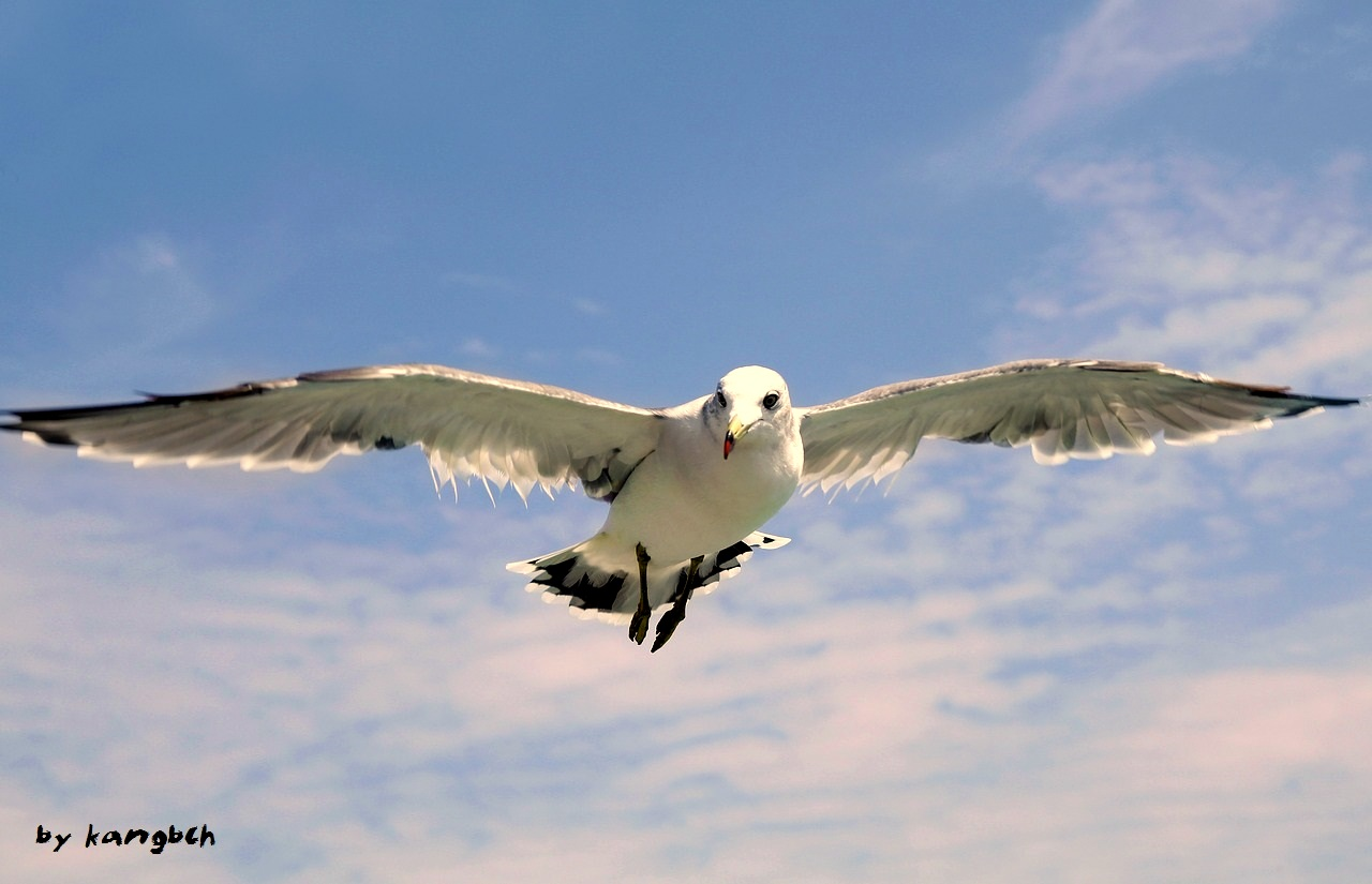 pic-6-by-kangbch-seagull-1684041_1280