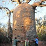 像一颗猴麵包樹,默默駐紮於非洲——西非短宣所遇宣教士側影(徐俊)2017.08.31