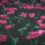 母親節,談談母親最偉大的美德是什麼?(李東光)2020.05.10