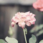 死前一刻,你最在乎什麼?(吳蔓玲)2017.04.24