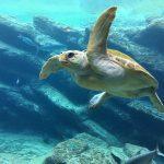 """一只""""海龟""""的回国三年(利河伯静)2021.02.24"""