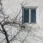 小樓無戰事(紅駒)2021.05.05